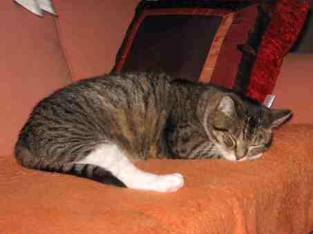 2006-06-7-sofa_003