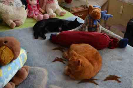 Was ist hier Katze, was isr Plüschtier?