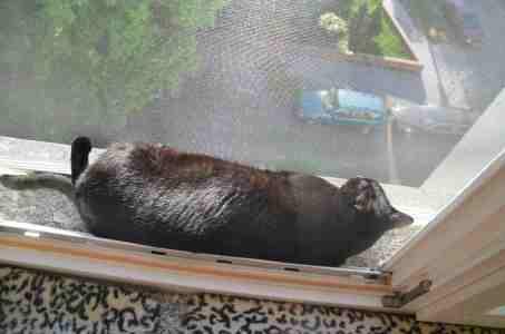 Dann leg ich mich eben auf den Balkon ..
