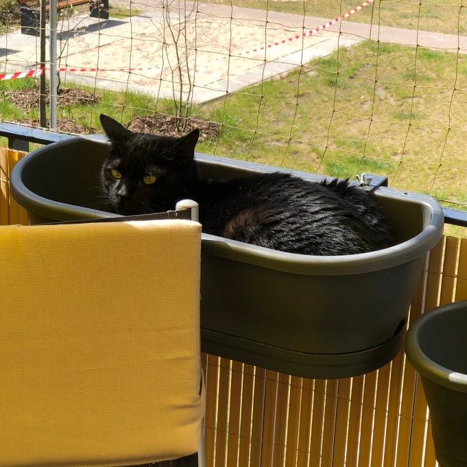 Wieso Blumenkasten, das ist ein Katzenbett!